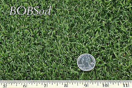 West Coast Turf BOBSod Sample