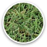 West Coast Turf E-Z Turf® Sample Thumbnail