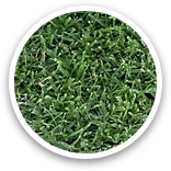 West Coast Turf Tifway II Bermuda Sample Thumbnail